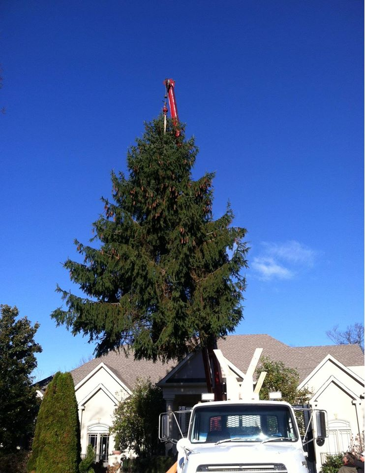 City Christmas Tree Arrives In Downtown Nashville